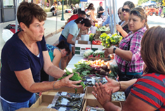 People Conversing at a Farmers Market